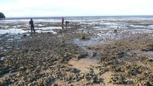 Hamparan Karang di Pantai Batu Payung, Sumba Timur